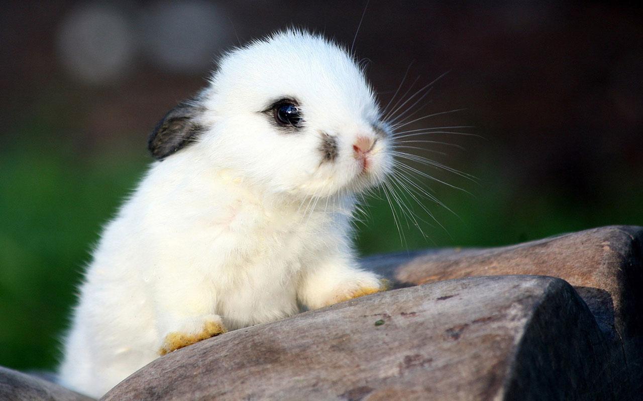 宝宝,喜欢小白兔吗